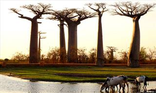 The 10 Most Amazing Attractions In Madagascar