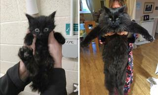 12 Heartwarming Photos of Kittens Before & After Adoption