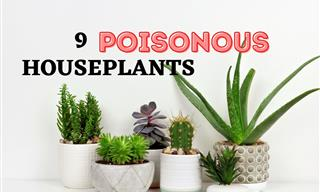 9 Houseplants that Are Poisonous For Both Pets and Humans