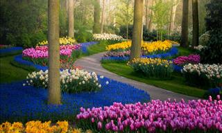The Most Beautiful Flower Garden in the World in 15 Photos