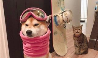 These 15 Hilarious Pets Know How to Cheer You Up Any Day!
