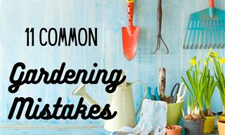 11 Gardening Myths That Must Be Debunked