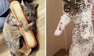 13 Cats Being Their WEIRDEST Selves