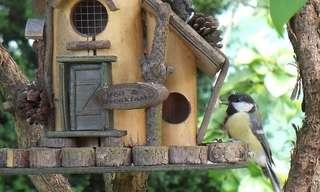 Make the Neighborhood Birds Happy