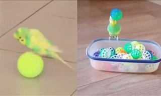 Budgies Are Just Sugar With Wings, Aren't They?
