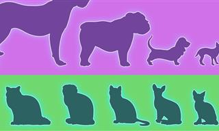 Despite Looking Similar, Cats Are MORE Diverse Than Dogs!