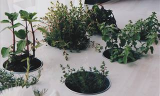 Select the Right Indoor Plant for Your Home