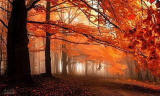 Collection: the Most Beautiful Trees and Forests