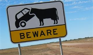 20 Side-Splitting Signs That Are Unique to Australia