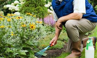 Test The Health of Your Garden with These Tips