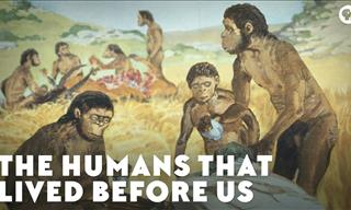 The Story of The Humans Who Lived Before Homo Sapiens