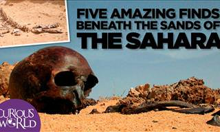 5 Fascinating Scientific Findings In the Sahara Desert