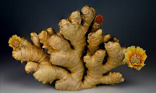 How Ginger May Help With Obesity and Fatty Liver Disease