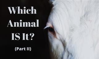 QUIZ: Which Animal Am I?