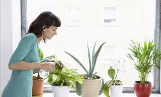Increasing Humidity for Your Houseplants
