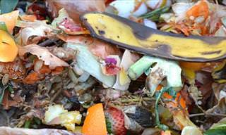 How to Use Your Food Scraps