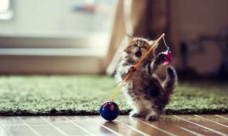 What an Adorable Little Puff Ball!
