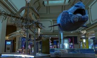 Enter the Museum of Natural History!