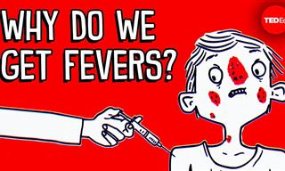 Discover What Happens In Your Body When You Have a Fever