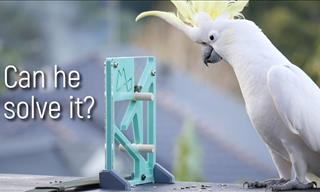 Just How Clever Are Wild Parrots? See For Yourself!