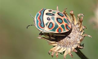 These Breathtaking Bugs Will Make You Want to Adopt Them as Pets