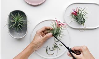The Definitive Guide to Air Plants: Planting and Care Tips
