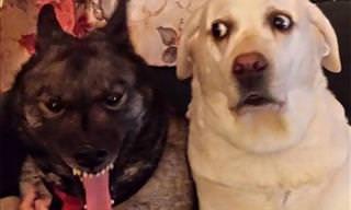 15 Hilarious Dogs