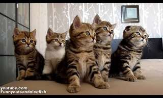 Getting All Your Kittens in a Row - Adorable!