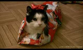 How To Gift Wrap Your Cat!