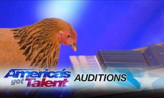 Watch This Patriotic Chicken Play a Tune!