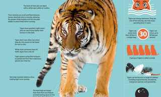 International Cat Day: All About the Tiger!