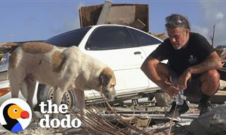 Meet the Man Who Rescues Animals From Disaster Sites