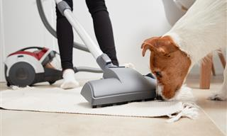 Is Your Dog Afraid of the Vacuum? These Tips Can Help