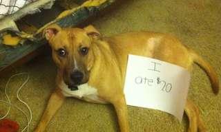 Bad Dog! You Should be Ashamed - Hilarious!