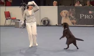 Dancing With Dogs is So Much Better Than Regular Dancing...