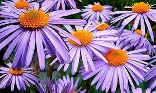 Enjoy Our Interactive Flower Collection