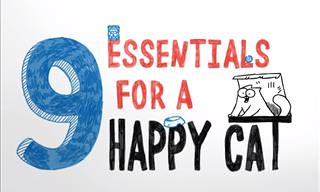 The Simon's Cat Guide of What Will Make Your Cat Happy