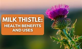Milk Thistle - 5 Health Benefits and Uses