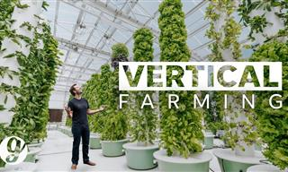 A Garden Without Soil - the Future of Growing Food