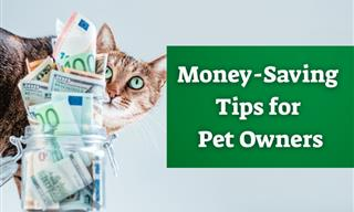 Want to Save Money on Pet Costs? These Tips Will Help