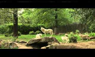 The Berlin Zoo in HD