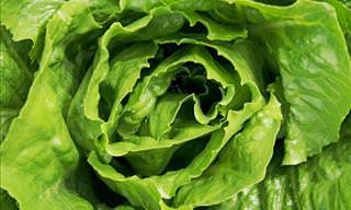 10 Amazing Health Benefits of Eating Lettuce