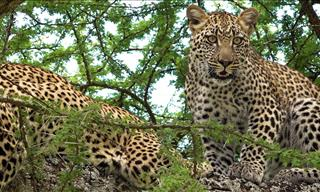 Serengeti Park: African Wildlife and Nature at Its Best