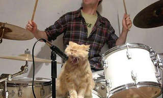Beastie Fun - Best Animal Photos!