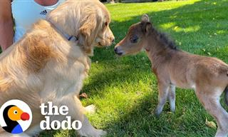This Baby Horse Has the Biggest Heart in the World - Cute!