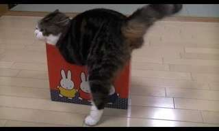 To a Cat, No Box is Too Small!