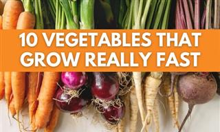 Gardening Tips - 10 Vegetables That Grow Really Fast