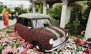 The Magnificient Chelsea Flower Show