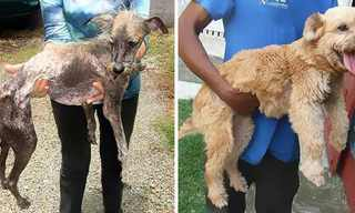 Amazing Transformations of Rescued Dogs