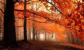 Magical Photos of Forests in Autumn
